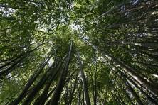 bamboo from NatJLN