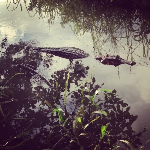 caiman by Courtney McCubbin