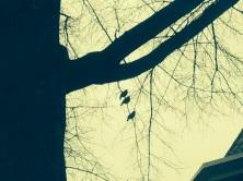 DC birds2